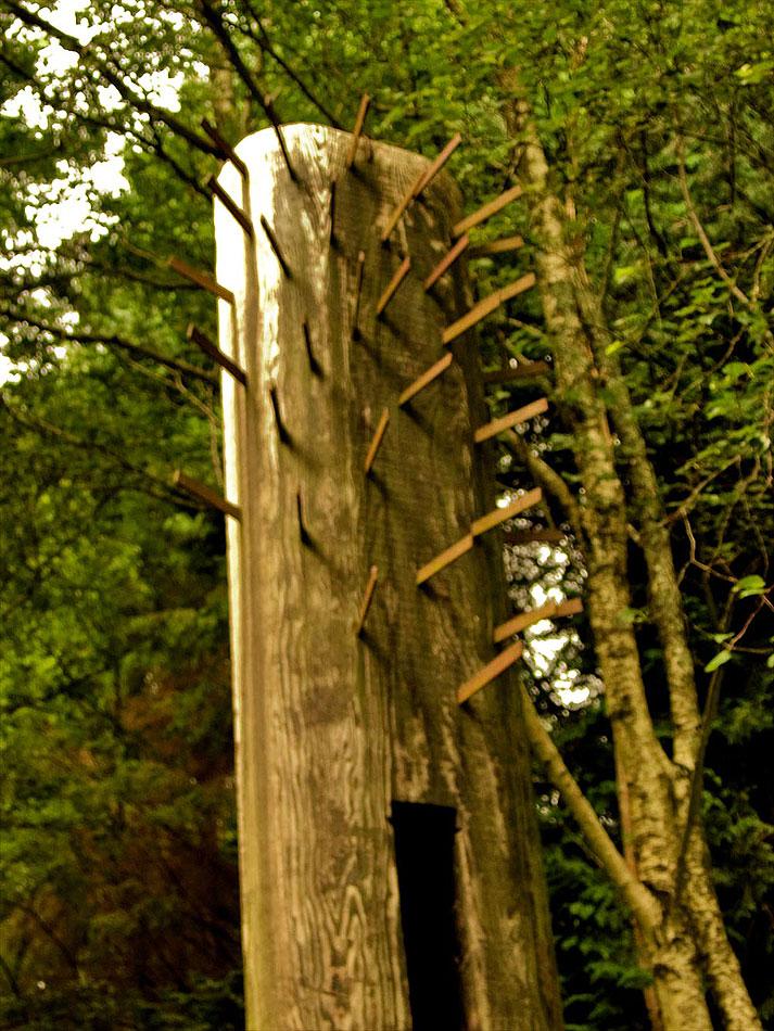 Woodland - Irlande du sud